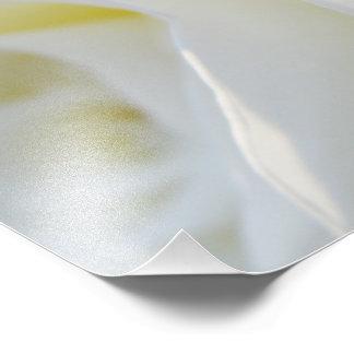 Rose blanc art photographique