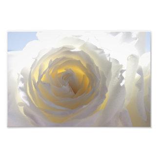 Rose blanc élégant photos sur toile