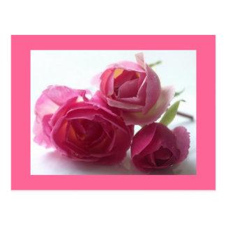 Rose Carte Postale