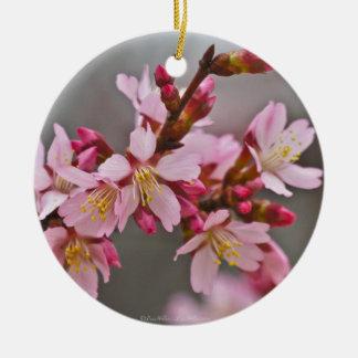Rose contre les fleurs de cerisier grises d'un ornement rond en céramique