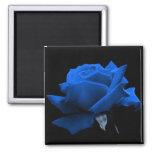 Rose de bleu magnet carré