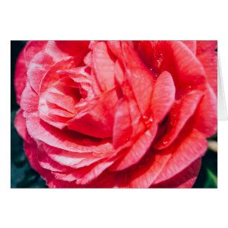 Rose de rose avec des baisses de l'eau, carte de vœux