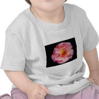 Rose de rose avec l arrière - plan noir de baisses t-shirt