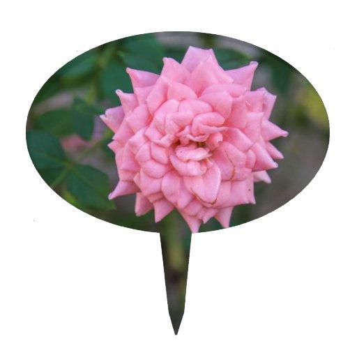 Rose de rose piques à gâteaux