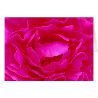 Rose heureux de rose de fête des pères III Carte De Vœux