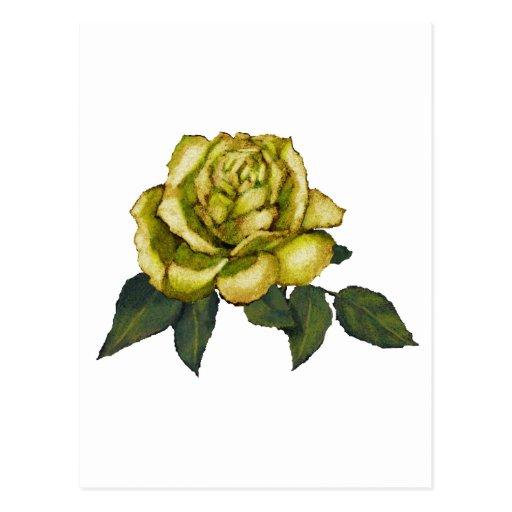 rose jaune dessin au crayon de couleur fleur carte postale zazzle. Black Bedroom Furniture Sets. Home Design Ideas