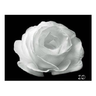 Rose noir et blanc carte postale