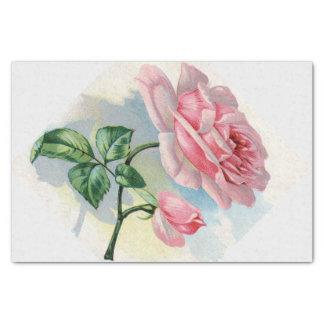 Rose rose de beauté sur le papier de soie de soie