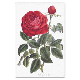 """Rose rouge 10"""" floral X 15"""" papier de soie de soie"""
