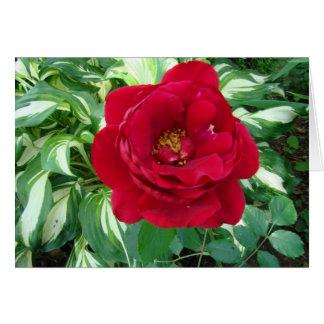 Rose rouge et Hostas de Varigated Carte De Vœux