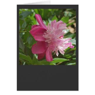 Rose, toujours carte de vœux