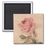 Rose victorien français de rose magnet carré