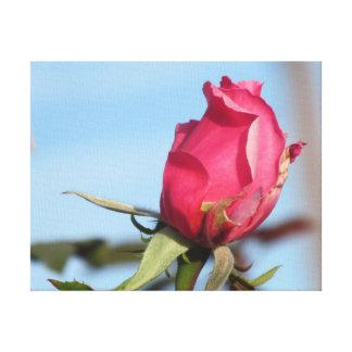 Rosebud rose toiles