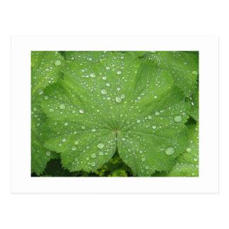 Rosée sur une carte postale verte de feuille