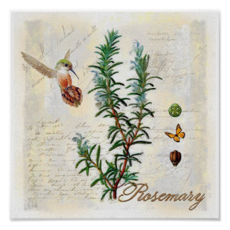 Rosemary, copie botanique d'art de colibri poster