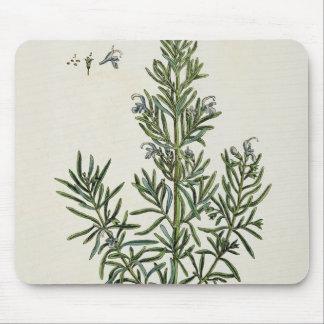 """Rosmarinus Officinalis, """"d'un de fines herbes curi Tapis De Souris"""