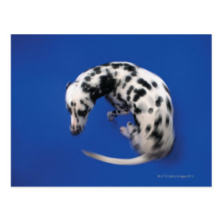 Rotation dalmatienne carte postale