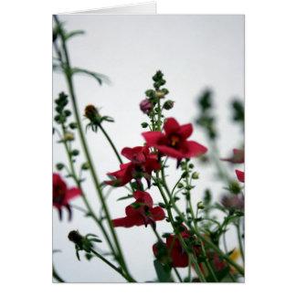 Rouge Carte De Vœux