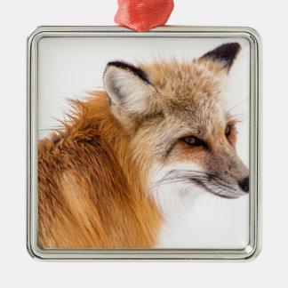 rouge-renard ornement carré argenté