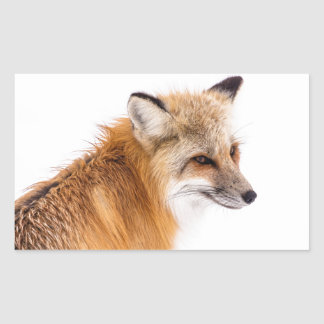 rouge-renard sticker rectangulaire