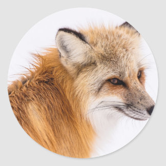 rouge-renard sticker rond