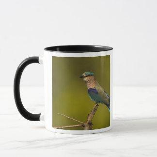 Rouleau indien été perché sur l'arbre ouvert mug