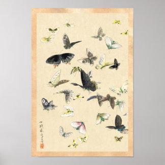 Rouleau vintage japonais frais de papillon posters