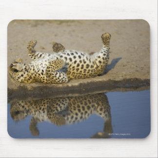 Roulement femelle de léopard (pardus de Panthera) Tapis De Souris