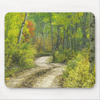 Route avec des couleurs d'automne et trembles dans tapis de souris
