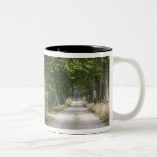 Route de campagne rurale de saleté près de la mug bicolore