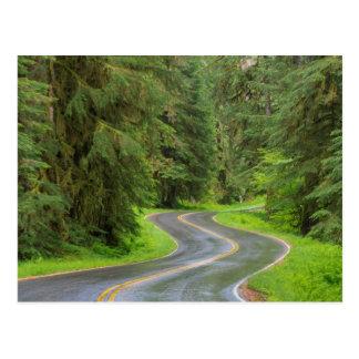 Route de rivière de solénoïde Duc par la forêt Carte Postale