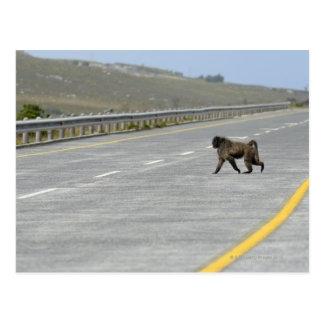 Route isolée de route de croisement de babouin de carte postale