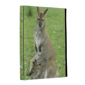 Rufogriseus à col rouge de wallaby, de Macropus), Coques iPad Folio