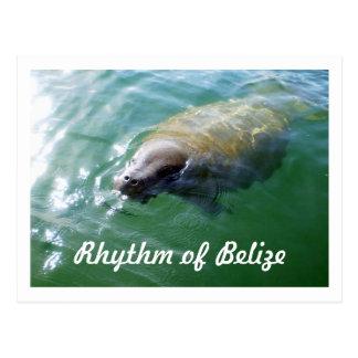 Rythme de lamantin de Belize dans la carte vierge