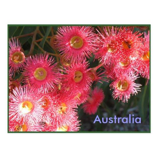 Salutations d'Australie Cartes Postales