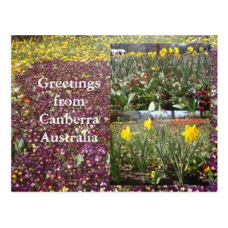 Salutations de Canberra Australie Cartes Postales