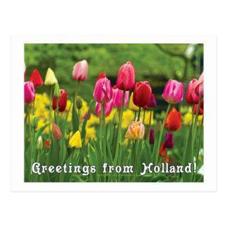 Salutations de Hollande Carte Postale