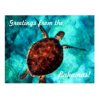 Salutations de la carte postale des Bahamas