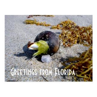 Salutations de la Floride Cartes Postales