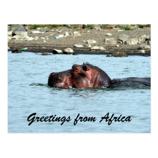 salutations d'hippopotame cartes postales