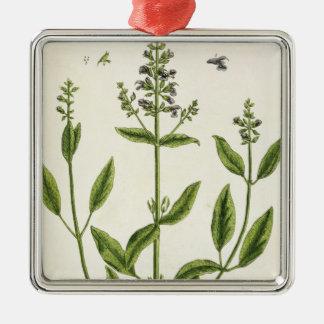 """Salviam """"d'un de fines herbes curieux"""", 1782 ornement carré argenté"""
