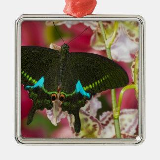 Sammamish, papillon tropical 14 de Washington Ornement Carré Argenté