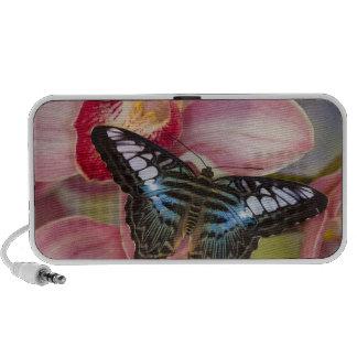 Sammamish, papillon tropical 2 de Washington Haut-parleur Mobile