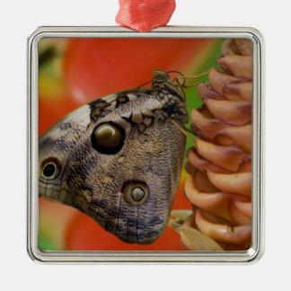 Sammamish, papillon tropical 2 de Washington Ornement Carré Argenté