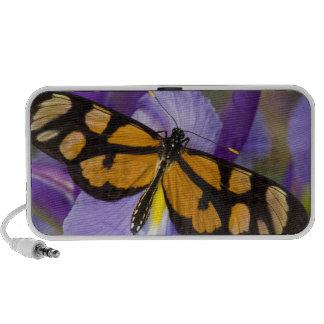 Sammamish, papillon tropical 34 de Washington Haut-parleur