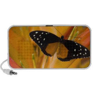 Sammamish, papillon tropical 35 de Washington Haut-parleur Portable