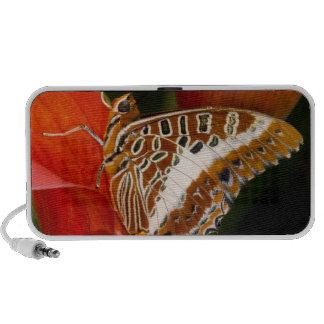 Sammamish, Washington. Papillons tropicaux 17 Haut-parleur Ordinateur Portable