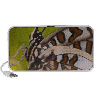 Sammamish, Washington. Papillons tropicaux 23 Haut-parleurs PC