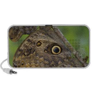 Sammamish, Washington. Papillons tropicaux 25 Haut-parleur iPod
