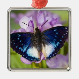 Sammamish, Washington. Papillons tropicaux 26 Ornement Carré Argenté